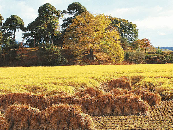 The church of God has long acknowledged the biblical analogy of a harvest r